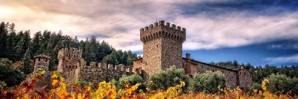 Castello, Napa, Kalifornia, Valley, Winnica, Di Amorosa